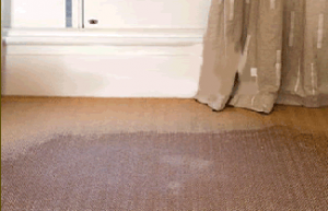 carpet restoration brisbane